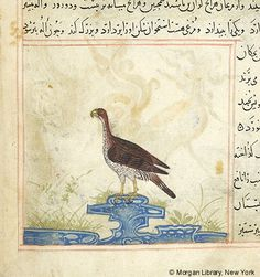 Bestiary, Eagle in left profile standing on rock. - The Morgan Library & Museum