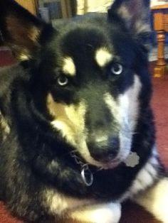 My sweet Cassie went to doggie heaven today 8-6-2014