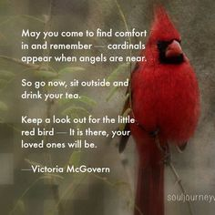 Cardinal comfort