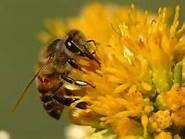 Bee season is upon us