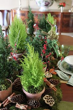 Mini cedar and cyprus christmas centerpieces, christmas tables, holiday centerpieces, thing farmer, holiday 2011, apples, christmas trees, christmas table settings, country