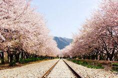 旅で見たあの場所は、今頃きっときれいな花が咲いているだろう。道草旅 with 花 旅人になろう ―総集編―。最高にドキドキできる幸せな時間が、旅にはある。H.I.S.は今、たくさんの人に「旅」に出てほしいとおもっている。
