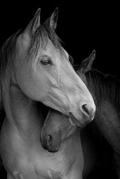 Horse whisper