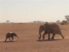 When this eight-month-old elephant calf fell into a well, her mother, Zombe, was understandably upset. See her incredible rescue and reunion! Adopt An Elephant, Elephant Love, Baby Elephants, African Forest Elephant, Asian Elephant, Mother And Child Reunion, Animals And Pets, Cute Animals, Elephas Maximus