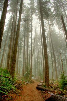Walking into a cloud, by kjellarsen.Tiger Mountain, Issaquah, Washington.
