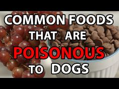 Can Dog Eat Nuts or Not ? Explained.