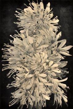 「猩々の花」120F 2017年 板に和紙 鉛筆・墨・アクリルガッシュ