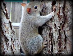 Gentle Joy Photography: Baby Squirrel Out of The Nest.....