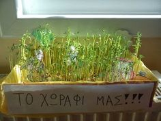 Νηπιαγωγός από τα πέντε...: ΑΠΟ ΣΠΟΡΑΚΙ-ΘΑΜΝΟΣ First Fathers Day Gifts, Environment, Plants, Kindergarten, Preschool, Autumn, Education, Kids, Young Children