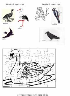 Útkeresés. Otthonoktatás, otthontanulás, magántanulóság. Szabadon tanulás, életiskola, homeschooling, unschooling.  És effélék. Bird Tree, Rooster, Kindergarten, Birds, Templates, Pattern, Puzzle, Animals, School