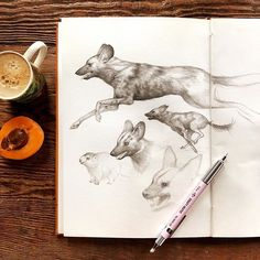 """Mab Graves on Instagram: """"Sketching away a migraine with some espresso and some African Wild Dogs (whom I'm currently completely obsessed with). Also a tiny baby…"""" African Wild Dog, Wild Dogs, Migraine, Moose Art, Drawings, Quick Draw, Animals, Instagram, Sketching"""