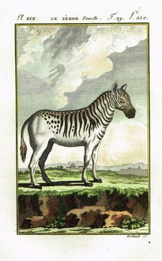 """RARE, ANTIQUE HAND-COLORED COPPER ENGRAVED ANIMAL PRINT This 217 year old print is from Count de Buffon & Charles Nicolas Sonnini's """"HISTOIRE NATURELLE GENERALE ET PARTICULARE"""". It was published in 17"""