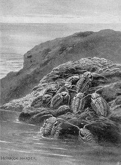 Trilobites  by Heinrich Harder (1858-1935)