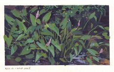 Wolf Lake Wolf, Sketches, Plants, Painting, Drawings, Painting Art, Wolves, Paintings, Plant