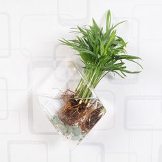 Rhombus Glass Water Planting Vase Indoor Planter Vase Geometric... ($5.80) ❤ liked on Polyvore featuring home, home decor, vases, home & living, home décor, silver, glass terrarium, modern vase, mini glass figurines and miniature figurines