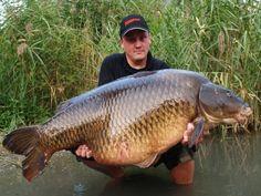 Record common carp