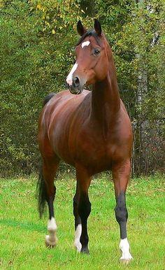 Um animal imponente . Guerras foram ganhas sob o lombo de um cavalo. Lugares foram desbravados, pessoas foram salvas. Um animal forte e elegante.