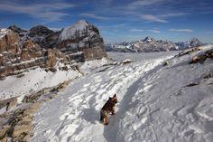 Téli Drei Zinnen kaland egyedül egy kiskutyával - Dolomitok Hiking Dogs, Mount Everest, Mountains, Nature, Travel, Naturaleza, Viajes, Destinations, Traveling