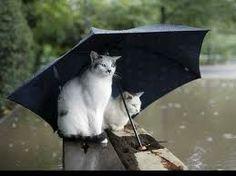 Quand arrête la pluie ? Papa, je voudrais chez moi...