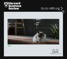 """It was just a matter of time. @Cisco's marketing department has gone full """"kitty."""""""