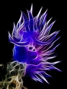 Acid Flabellina Affinis - is a species of sea slug, an aeolid nudibranch, a marine gastropod mollusk in the family Flabellinidae. Underwater Creatures, Underwater Life, Ocean Creatures, Under The Water, Under The Sea, Beautiful Sea Creatures, Sea Slug, Water Animals, Deep Blue Sea