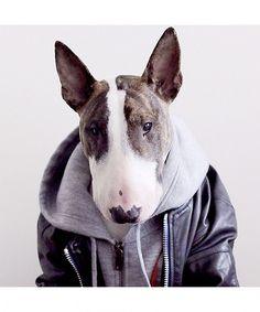 Neville, Marc Jacobs' Bull Terrier