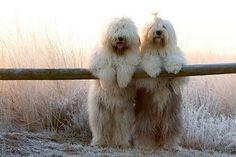 precious! #dogs