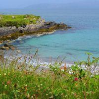 Coastal Wildflowers, Garnish Beach, Allihies, West Cork,  Ireland