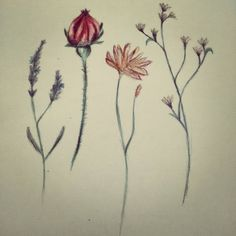 """Simple flower sketches - tattoo ideas """" #sketching #tattooinspiration #pencildrawing #flowers"""""""