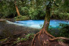 Teñidero - Le Teñidero qui marque la naissance du río Celeste. C'est effectivement l'endroit où s'unissent le río Buenavista et la Quebrada Agria. L'eau y change de couleur, passant d'une transparence totale à une couleur bleu turquoise du fait de la réaction chimique entre le carbonate de calcium et le soufre s'échappant des entrailles du volcan Tenorio.