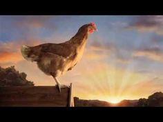 #happyeggs The Happy Egg Co - Chariots of Eggs advert