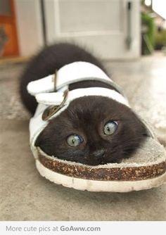 OMG how cute!