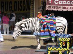 Mexican_Donkey.lol....