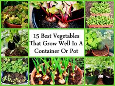 15 Best Vegetables That Grow Well In A Container Or Pot