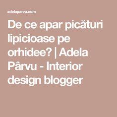 De ce apar picături lipicioase pe orhidee? | Adela Pârvu - Interior design blogger