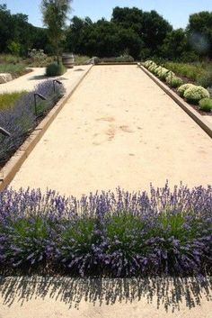Small Bocce Ball Court Design Ideas Pictures Remodel and Decor - the Lavendar is perfect - William Joyce Design - Torreon back yard? Outdoor Landscaping, Outdoor Gardens, Landscaping Ideas, Courtyard Gardens, Modern Gardens, Modern Landscaping, Bocce Ball Court, Royal Garden, House Landscape