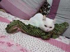 Pillow croc...
