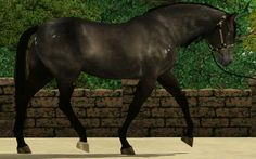 Sims 3 Horses for Sale | ... by Caitlin Demura on Fri Apr 19, 2013 3:35 am, edited 1 time in total