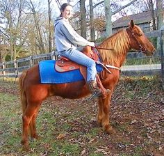 SADDLE PONY FLAX MANE & TAIL == - $303 (Science Hill, KY)