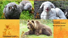 """Gewinnspiel """"Europäische Zootiere"""" auf Facebook"""