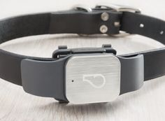 The Whistle GPS Pet Tracker is the best solution for monitoring your pet's location and activity with one device.