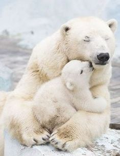 A very beary hug I #wildlife I #wildanimals via @KaufmannsPuppy