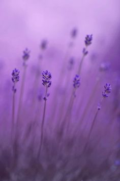 lavender color - Google Search