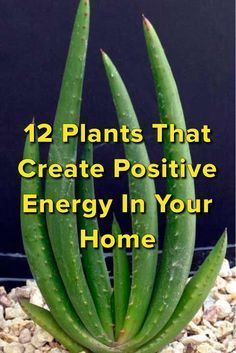pflanzen züchten 12 Plants That Create Positive Energy In Your Home We are want to say thanks if you