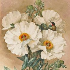 Poppies by deLongpre