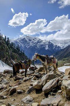 Horses | Stunning Naran Valley - Pakistan.