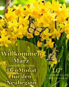 Neuer Monat, Herbs, Erika, Seasons Months, Monthly Pictures, Good Morning Wishes, Quotes Motivation, Women Day, Herb