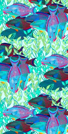 ~ Su Schaefer - a pack of parrotfish