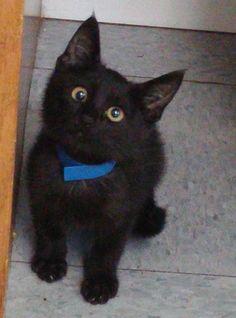 googly eyed shelter kitten