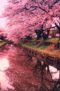 Ponderation : Photo Pink Dream | Hanson Mao